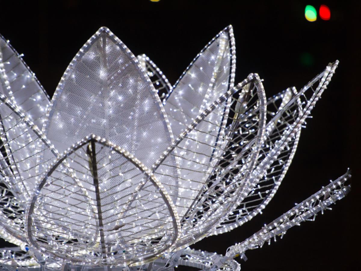 Illuminations Noël nenuphars-Deauville