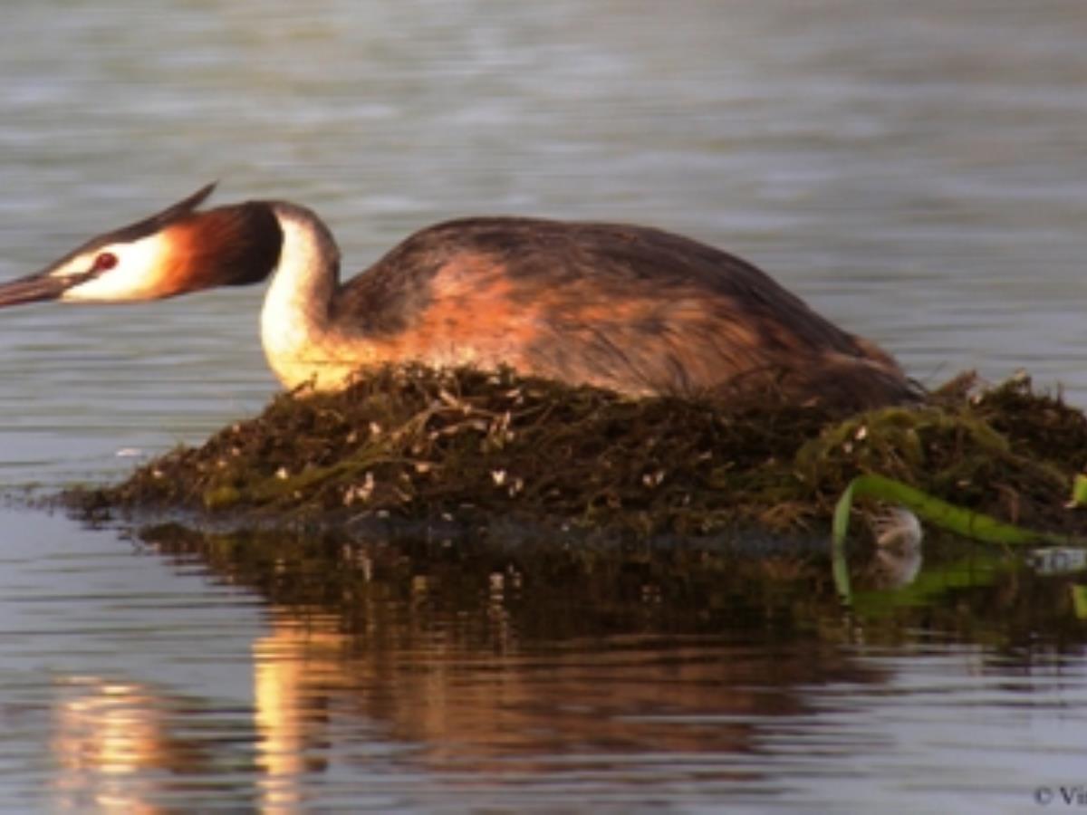 Identification des oiseaux d'eau - Val-de-Reuil