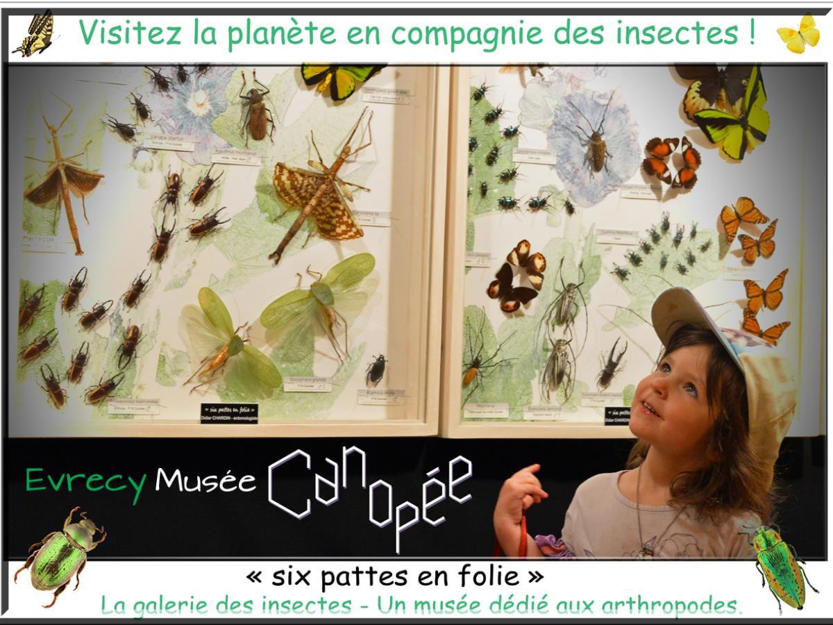 Canopée - La Galerie des Insectes