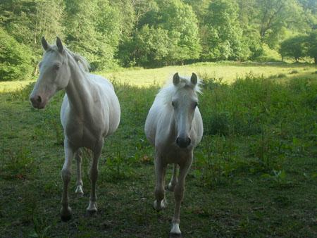 Chevaux et poneys - ©© La Cour Coeuret