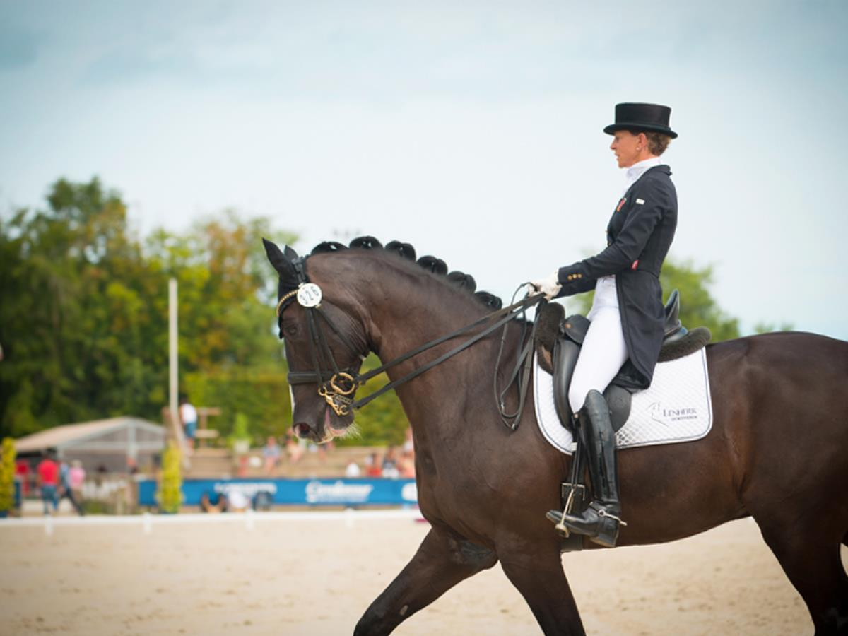 Dress'in Deauville, concours de dressage international