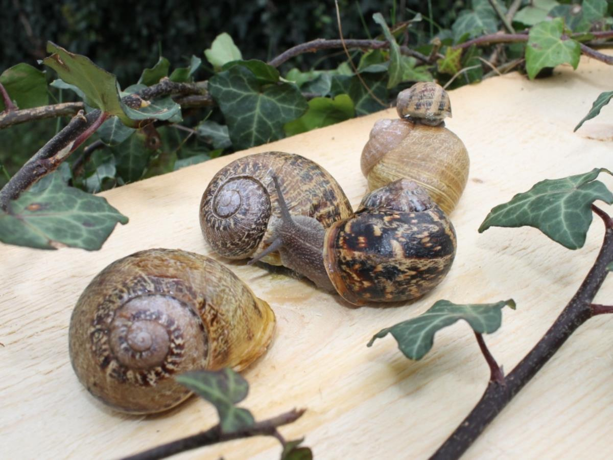 Ferme de Vailly - Elevage d'escargots