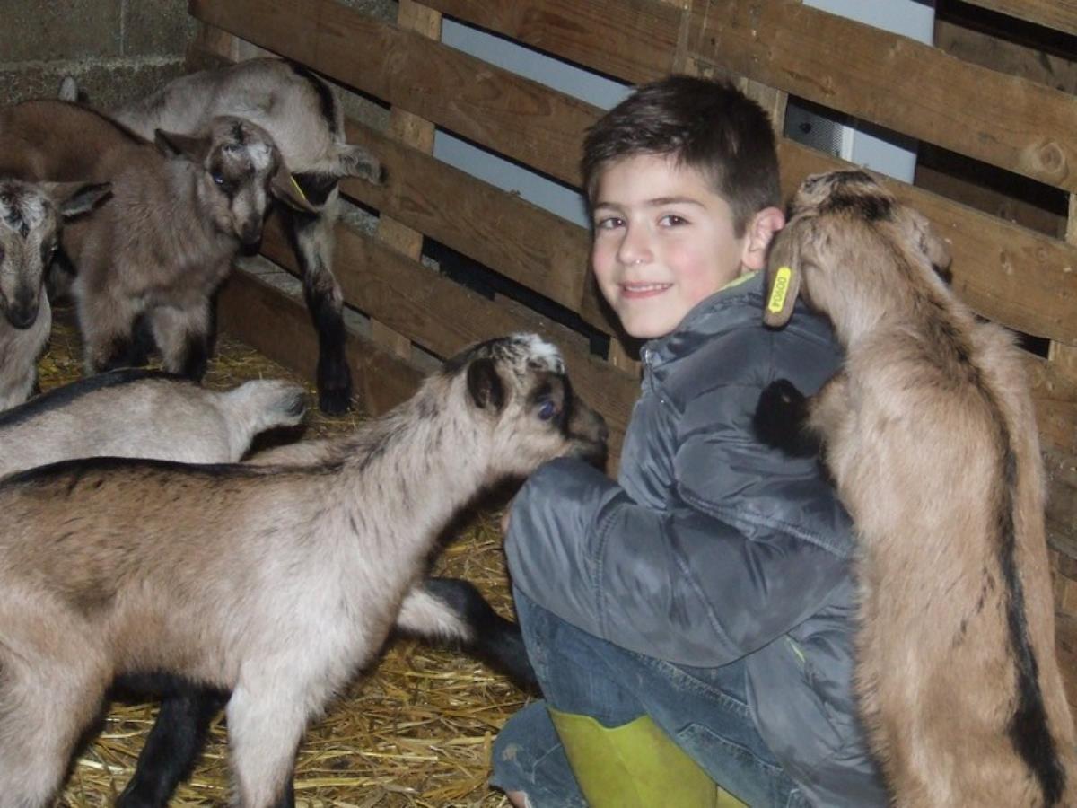 Printemps à la Ferme :  Les Chèvres de la Saffrie à Montchamp
