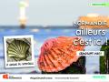 La-coquille-St-Jacques-de-Grandcamp-Maisy
