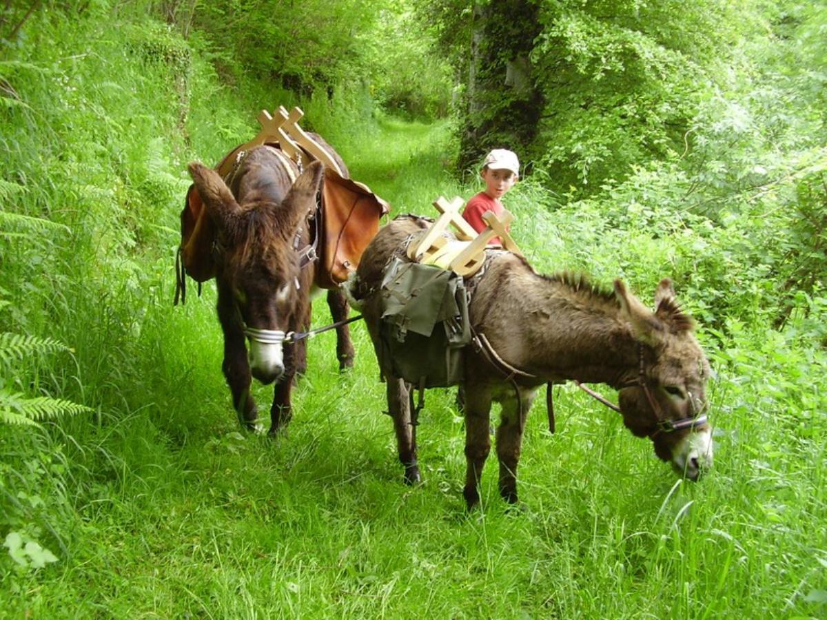 Randonnée pédestre avec les ânes à St-Pierre-Tarentaine