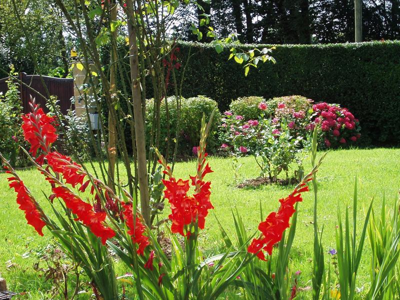 Les Mouettes à Tourgéville, jardin - ©Mme Deleu - Clévacances