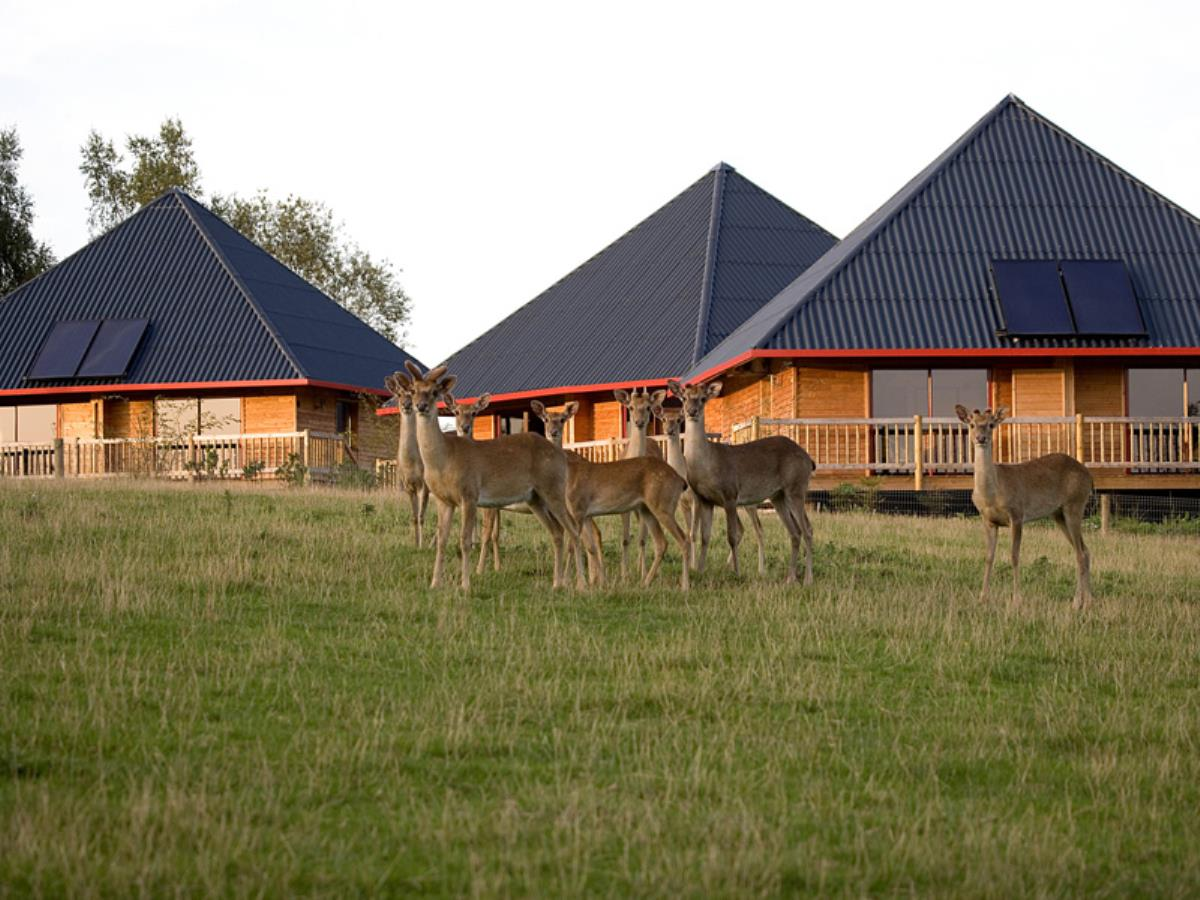 Cerza Safari Lodge