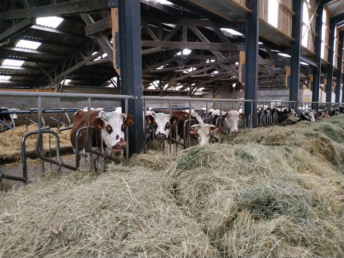 Printemps à la ferme : Oh la vache chez Naturellement Normande à Landelles et Coupigny
