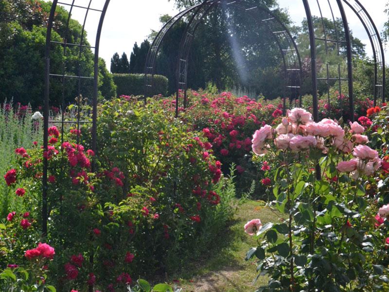 jardin-manou-rosiers-percy-