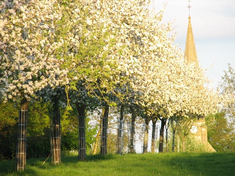 la Ferme du Bout du Chemin   pommiers en fleurs - ©N. Bignon
