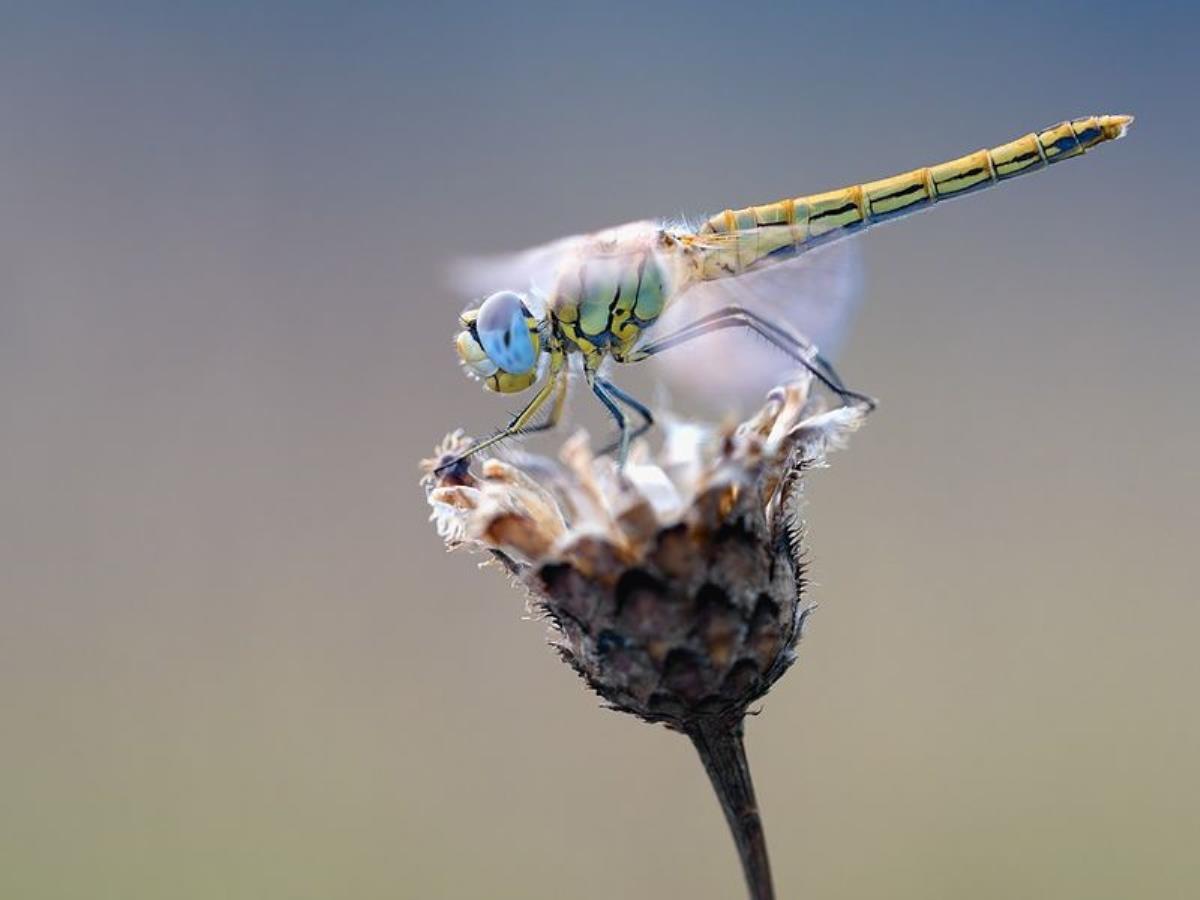 Drôles de bidules ces libellules !