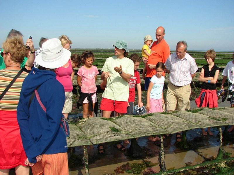 Visites parcs à huitres - ©OTI Isigny-Grandcamp