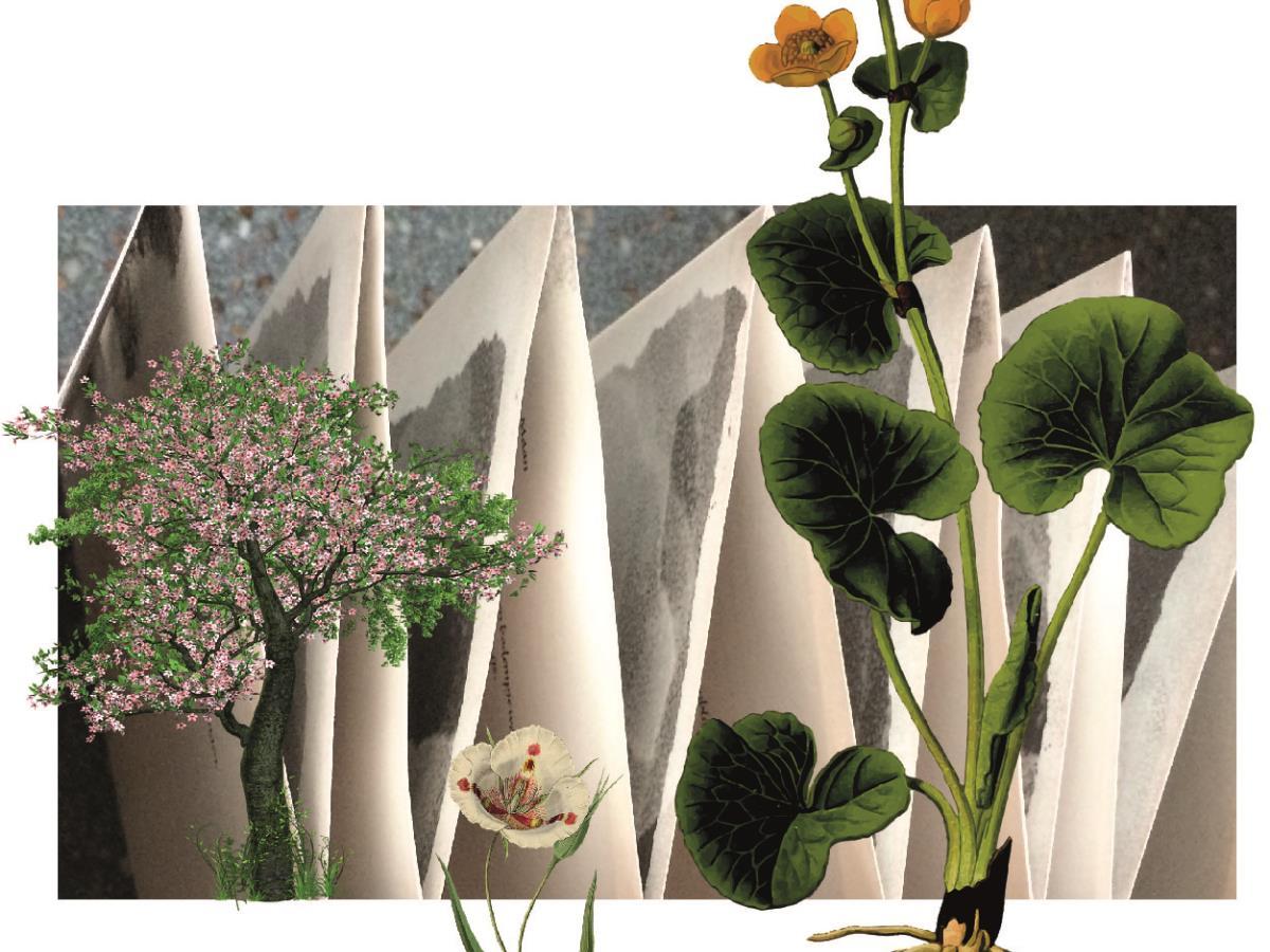 Stage Confection d'un leporello sur le thème de la Flore
